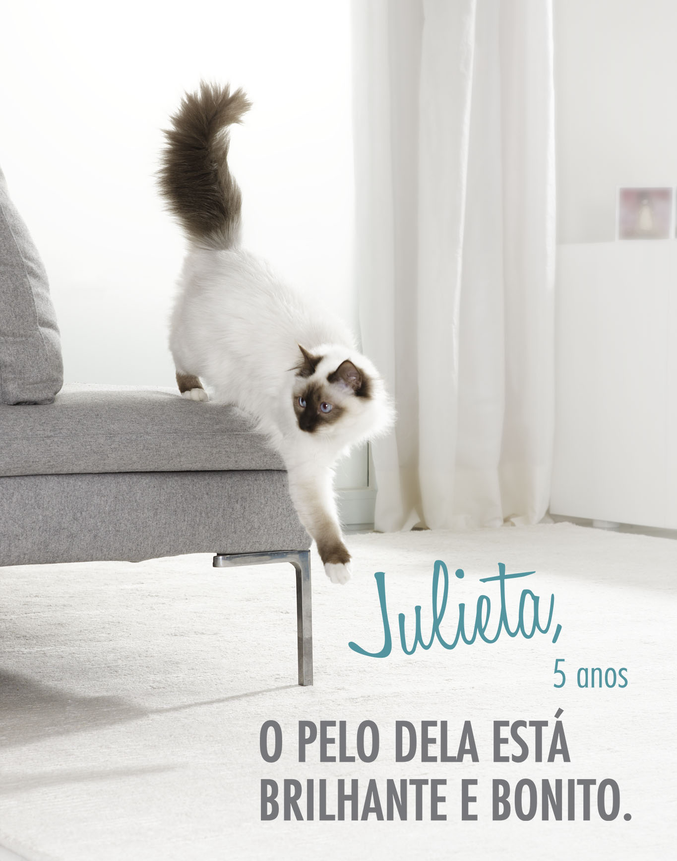 Purina ONE Gato